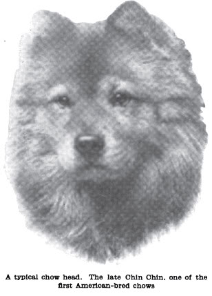 How breeders and judges destroyed the unique Chow-Chow (1/6)